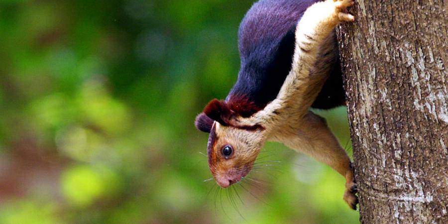 wildlife in india
