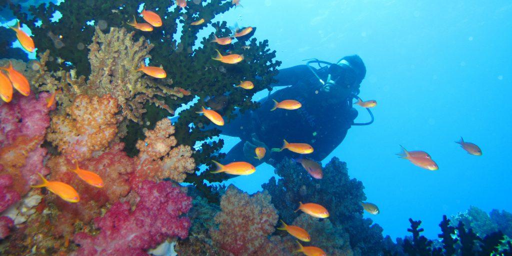 A GVI participant explores the coral reef.