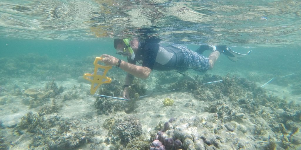 A diver explores the coral reef.
