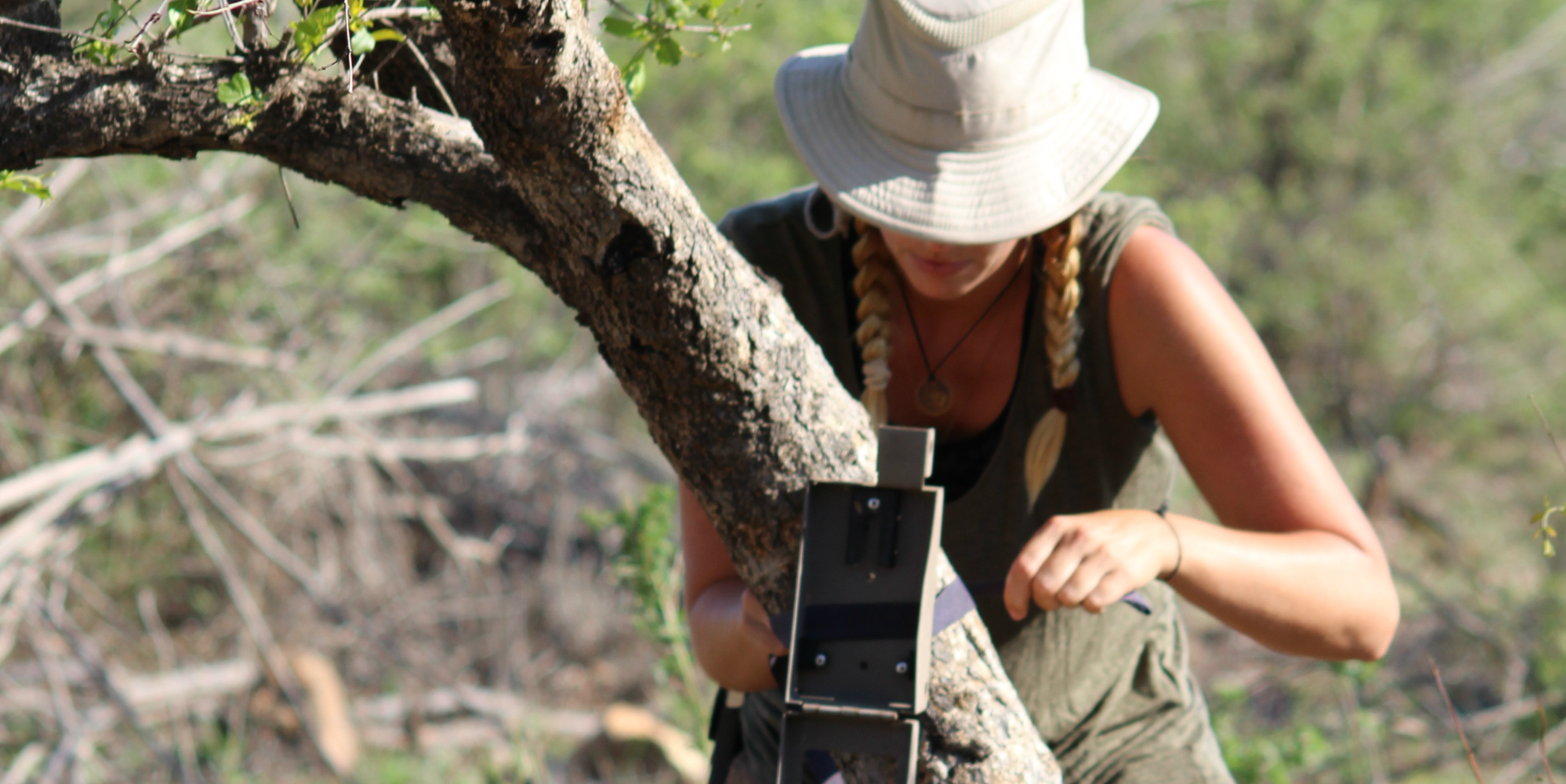 A GVI animal volunteer abroad sets up a camera trap to record animal movement and behaviour.