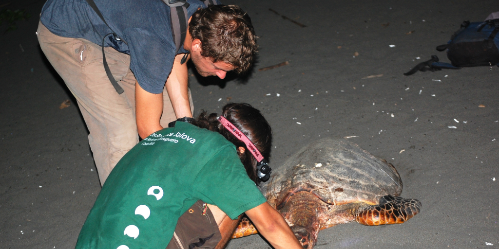 GVI volunteers use red light technology to reduce the impact of light pollution on turtles
