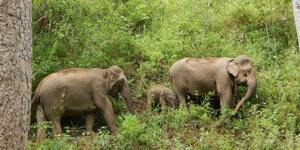 Searching for the best place to visit elephants in Thailand? Look no further than Chiang Mai