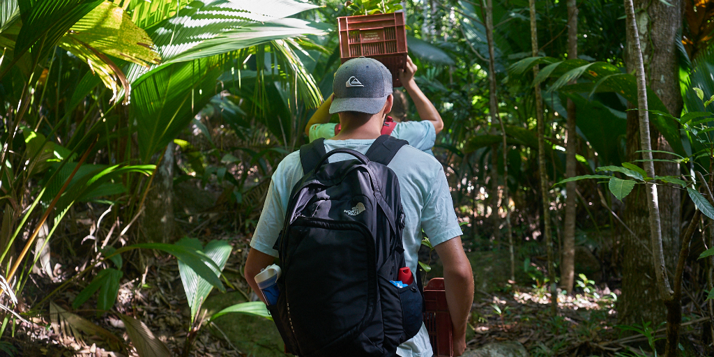 Volunteers walking to collect data in the Seychelles mangrove forests