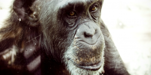 Animal conservation facts
