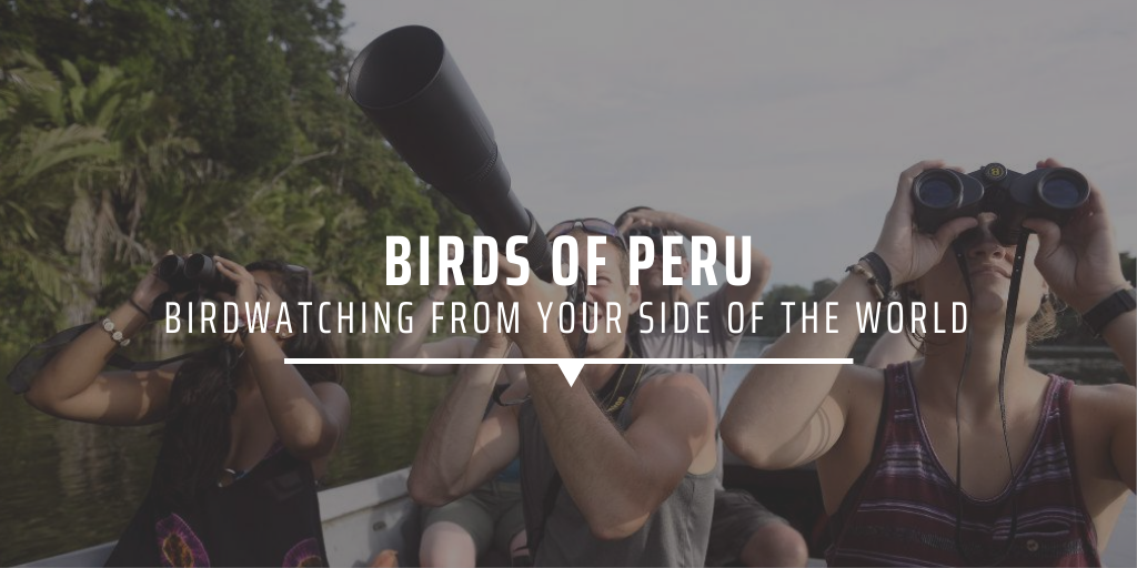 Birds of Peru birdwatching from your side of the world