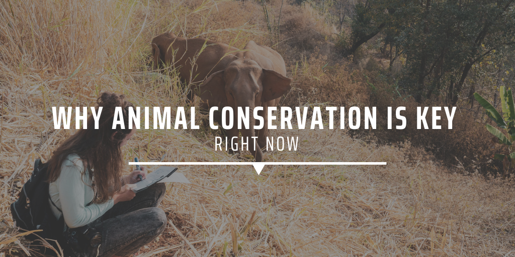 why animal conservation is key right now