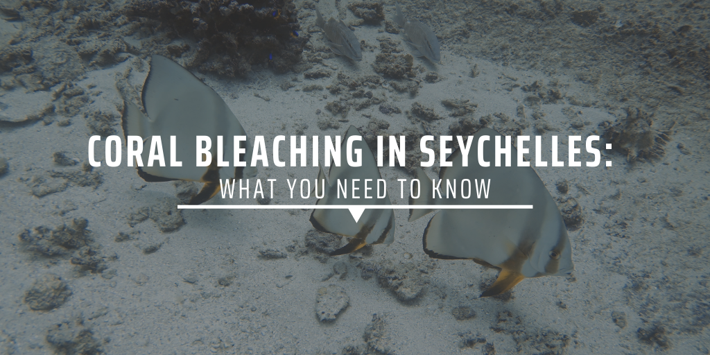 Coral bleaching in Seychelles: what you need to know