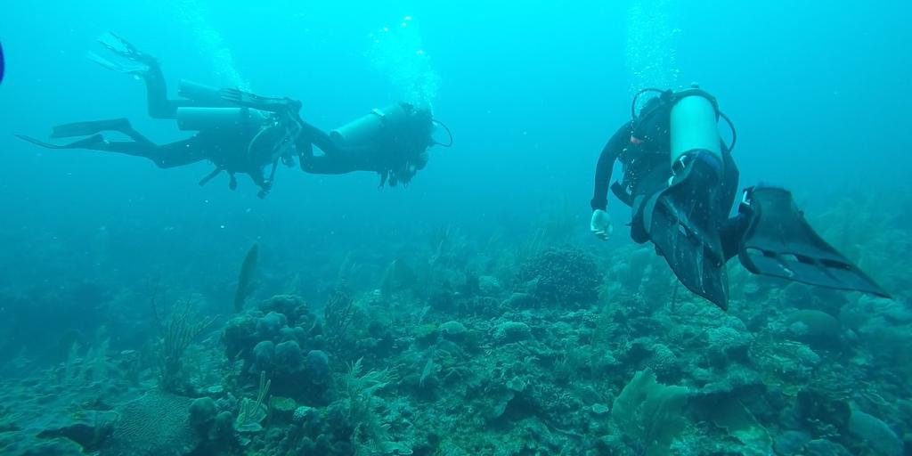 GVI volunteers are assessing the oceans coral reefs.