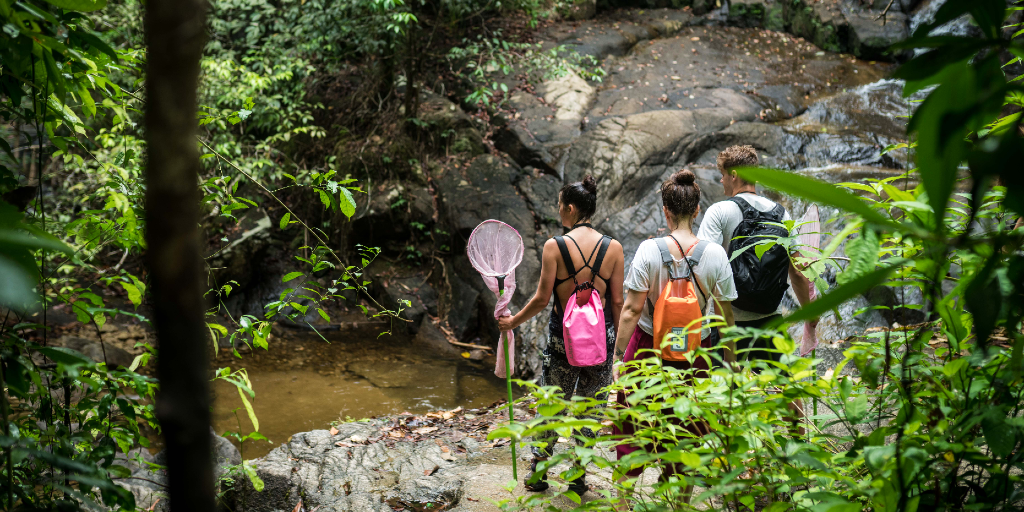 GVI volunteers can participate in wildlife conservation programs in rainforests.