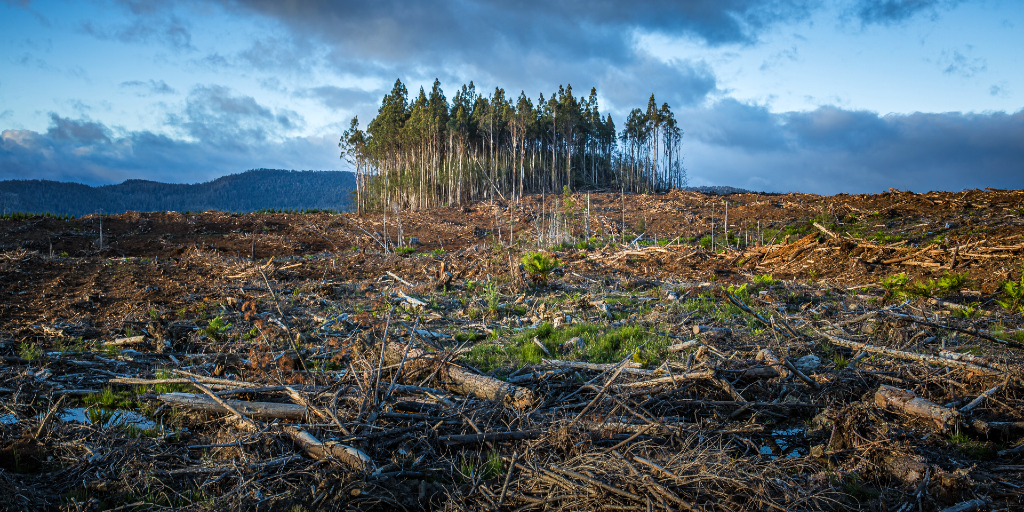 Many trees are being lost due to climate change.