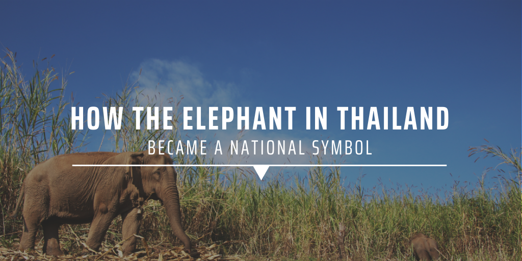 How the elephant in Thailand became a national symbol
