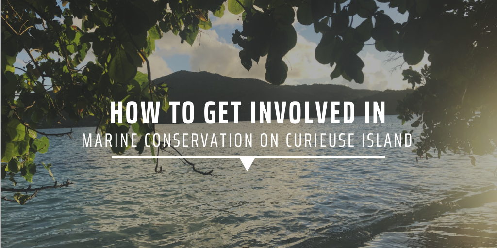 How to get involved in mangrove conservation on Curieuse Island