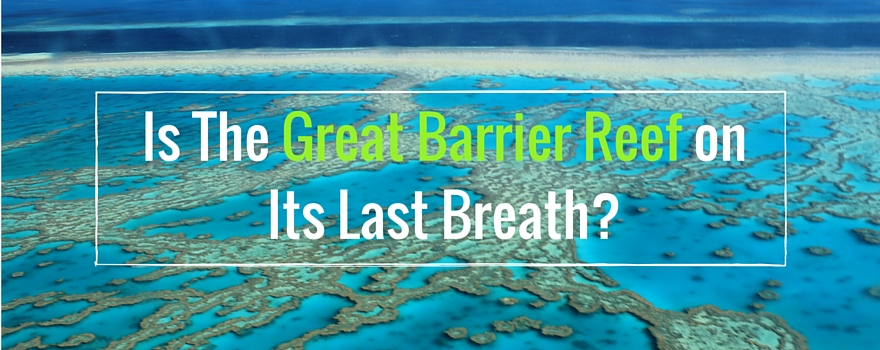 Is The Great Barrier Reef on Its Last Breath | GVI