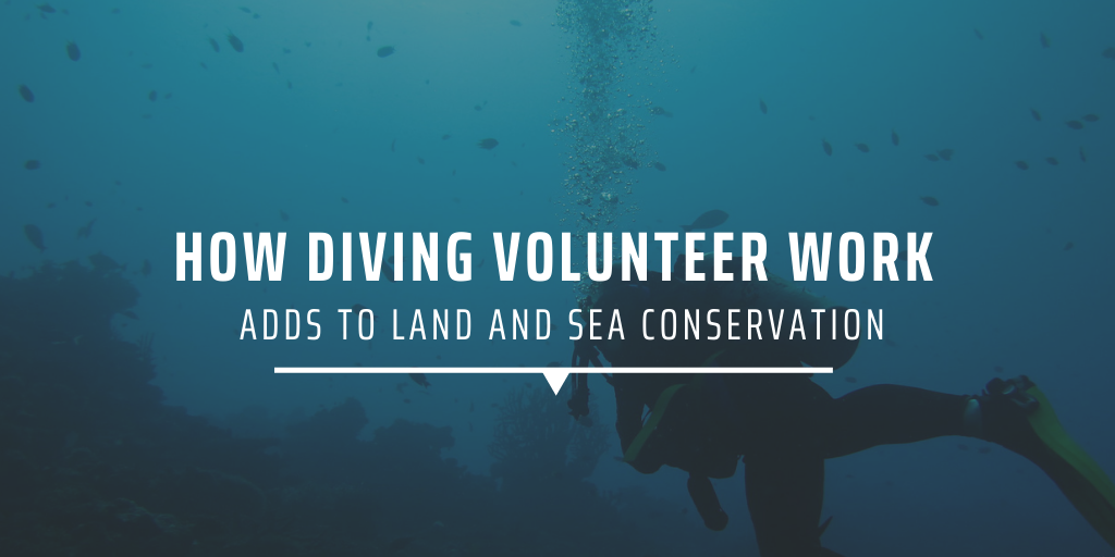 How diving volunteer work adds to land and sea conservation