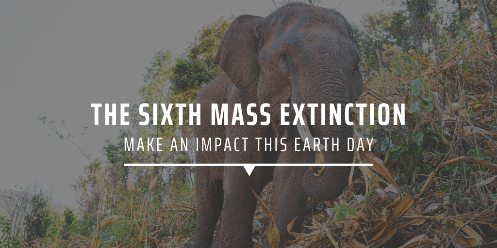 The sixth mass extinction: Make an impact this Earth Day